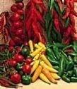 30-birds-eye-chili-pepper-chiltepin-pepper-capsicum-frutescens-vegetable-seeds-by-seedville