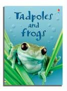 Tadpoles And Frogs (Beginners Series)