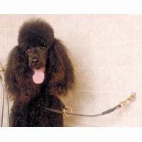 ProGuard 34 Lasso Restraint w/Snap Keeps Pet Secure by Pro Guard - Guard Snap