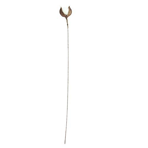 Canifon Flores Artificiales Tallos De Algodón Naturalmente Secados Casa De Campo Decoración De Flores Artificiales Relleno Floral