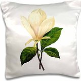 Designs Redoute Fruits and Flowers - Redoute Vintage Watercolor Floral Saucer Magnolia Magnolia Soulangiana - 16x16 inch Pillow Case