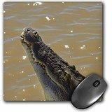 danita-delimont-crocodiles-jumping-crocodile-cruise-adelaide-river-australia-au01-dwa4595-david-wall