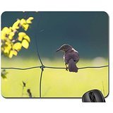 bird-eyes-open-mouse-pad-mousepad-birds-mouse-pad