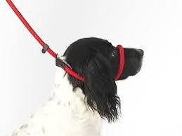Dog-Field-Figure-8-Anti-Pull-Lead-Halter-Head-Collar-One-Size-Fits-All-Super-Soft-Braided-Nylon-Fitting-Instructions-Included