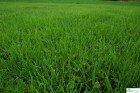 Rasen Schattenrasen Grassamen Rasensamen Rasensaat Gras 10kg -