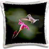 Angel Wings Designs Wildlife - Ruby Hummingbird Feeding on Red Flower in Summer - 16x16 inch Pillow Case