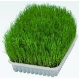 2 X PACKS OF GROW YOUR OWN TRIXIE CAT GRASS | TWIN PACK INCLUDES 2 X 100g OF SEEDS IN GROWING COMPOST AND 2 X GROWING TRAYS