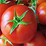 PLAT FIRM GRAINES DE GERMINATION: 100 - Graines: Saint Pierre de tomates - tomates - 3 Französisch-Zoll, pourriture, rund, Tomaten! Geben Sie Schiff !!