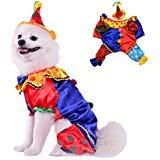Visky Hund Halloween-Kostüm mit Hut für Party Bekleidung-Medium
