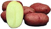 amorebio Bio Kartoffel rot vfk (1 x 1000 gr)