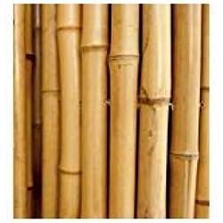 cañas de Bambú para sujetar hortalizas y otros usos, unidades de 5cañas