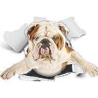 Winston & Bear Perro 3D pegatinas - Pack 2 - British Bulldog Sticker para la pared, nevera inglés Bulldog