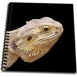 3dRose db_155073_1 Central Bearded Dragon Lizard Portrait Drawing Book, 8 by 8-Inch