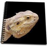 3drose DB _ 155073_ 1Streifenköpfige Bartagame Lizard Hochformat Zeichnen Buch, 8von 20,3cm
