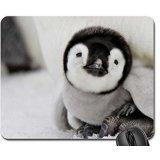 Little Penguin Mouse Pad, (Little Penguin)