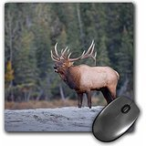 danita-delimont-deer-canada-alberta-rocky-mountain-elk-bugles-during-fall-rut-jasper-np-mousepad-mp-