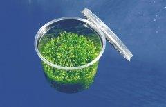 riccia-fluitans-10-grams-live-plants