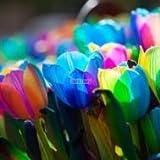 Keland Garten - Selten Regenbogen Tulpen Blumensamen winterhart mehrjährig Blumenmeer für Ihr Garten, Terassen, Topf, Balkon