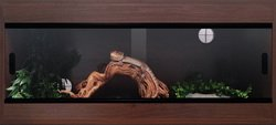 Terapod Slim Vivarium, Walnut 36