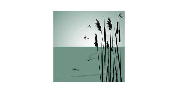 Reeds In The Water And Few Dragonflies Vector 43554280 Canvas 30 X 30 Cm Amazon Co Uk Kitchen Home