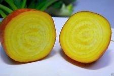 Betterave biologique, Golden Detroit 300+ Seeds-Heirloom, excellent choix pour le décapage!