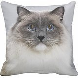 Christmas Present Portrait Of Ragdoll Cat Pillow Cover Case 18 X 18inch