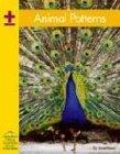 Animal Patterns (Yellow Umbrella Books: Math) by Janet Reed (2004-07-06)