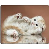 msd-natural-rubber-gaming-mousepad-image-id-10084651-the-fluffy-striped-white-browb-beautiful-kitten