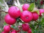 garlic-wonder-fruit-tree-care-500ml