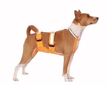 Gilet de chien de chasse (ventrale et coffre protection) Petite