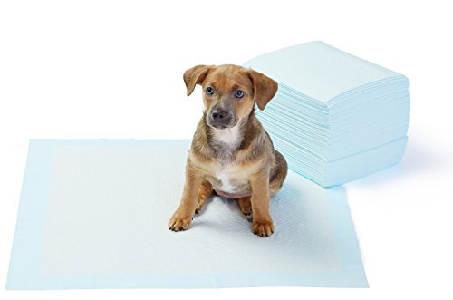 AmazonBasics Pet Training Pads, Regular