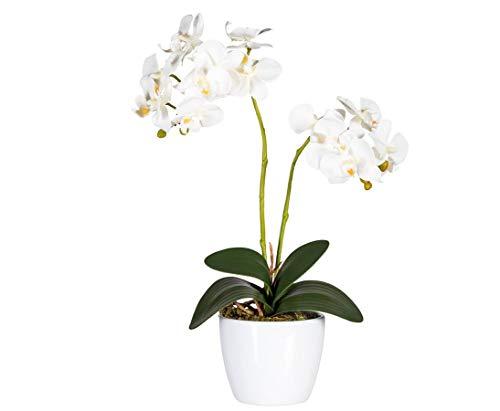 kunstpflanzen-discount.com Orchidee künstlich, mit 2 Creme weissen Blüten, 50cm hoch - Kunstblumen