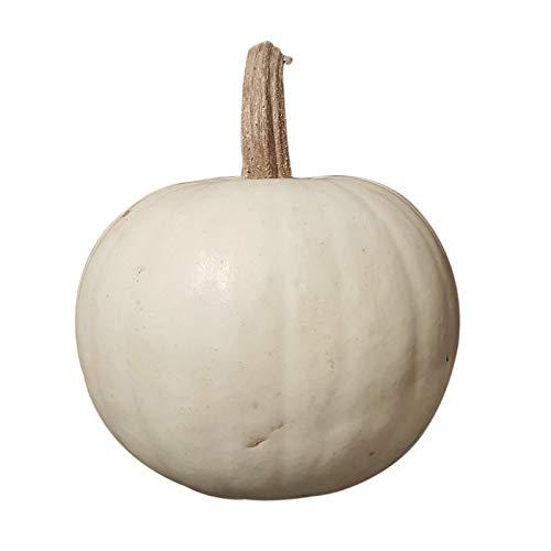 Preisvergleich Produktbild 1 Snowball Kürbis - weiß ca. 600 Gramm und ca. 10-15 cm Durchmesser - ALS Halloweenkürbis und Speisekürbis