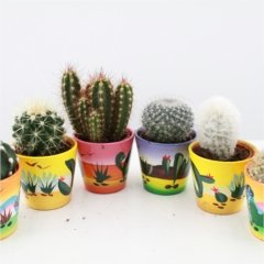 cactus-starter-set-fun-and-colourful-decorative-pots-range-of-cactus-types-wonderful-for-starting-a-