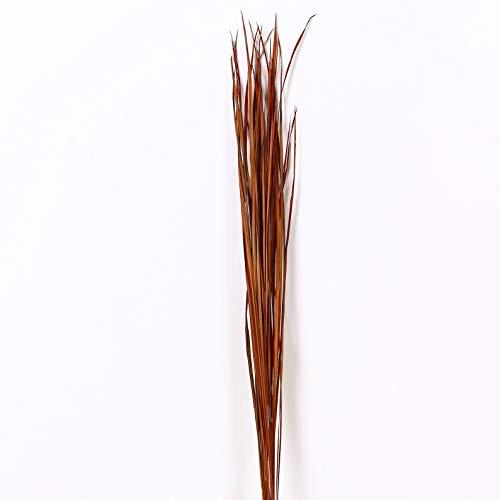 Leewadee Fascíone di Erba Naturale Colorata essiccata per vasi da Terra Mazzo di ramoscelli Decorativi 120 cm, Erba, Marrone