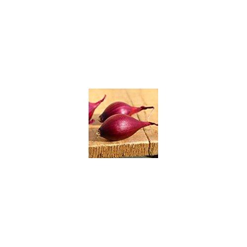 Plants Oignon 14/21 Red Karmen à Repiquer 250G