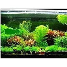 Pinkdose 100pcs / 22kinds bolsa bonsai + secretas regalos Fish Tank Java helecho de agua,