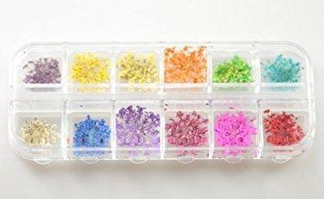 Cinq Saisons Décoration Fleurs séchées 12 couleurs nail art Sticker DIY