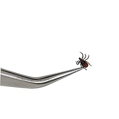 TOME Tick Remover Hook Tool set Pet Comb Stainless Steel Tweezers Removes Ticks And Fleas For All Pets 8