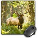 Danita Delimont - Deers - Washington, Olympic NP, Roosevelt elk bull in the rainforest. - MousePad (mp_208530_1) -