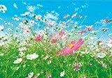 Fototapete Blumenwiese - Größe 366 x 254 cm, 8-teilig