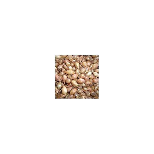 Plant Oignon 14/21 Sturon à Repiquer 500G