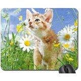doux-chaton-entre-les-marguerites-mouse-pad-mousepad-cats-mouse-pad