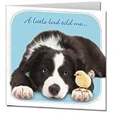 "Border Collie ""Little Whispers"" Birthday Card"