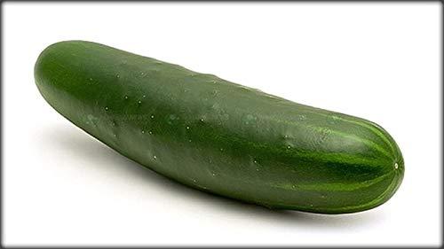PLAT FIRM GRAINES DE GERMINATION: 100 - Graines: Concombre amélioré vert - Norme pour trancher le concombre, 10 à 12\