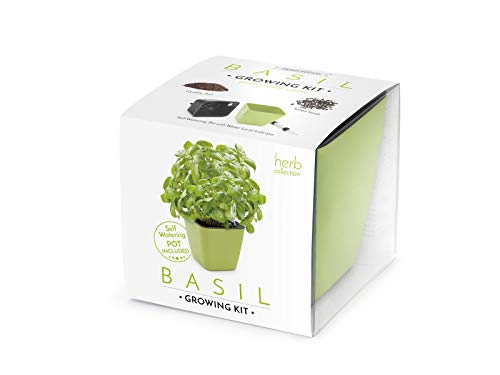 domestico set di basilico per la coltivazione, basil growing kit, all-in-one set, vaso autoinnaffianti 13x13 cm, i semi, il substrato fresco pieno di nutrienti