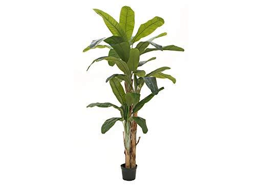 Unbekannt EUROPALMS Bananenbaum, Kunstpflanze, 240cm