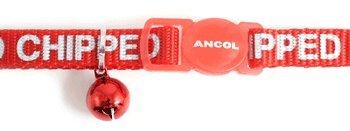 Ancol i Am microchipped Gatto Collare con fibbia di sicurezza, colore: rosso