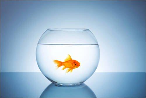 Póster 91 x 61 cm: Fishbowl with Goldfish rclassen