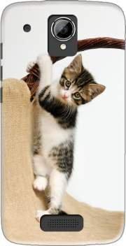 Coque SFR Startrail 7 rigide motif Bébé chat, mignon chaton escalade de protection et personnalisation - Mobilinnov